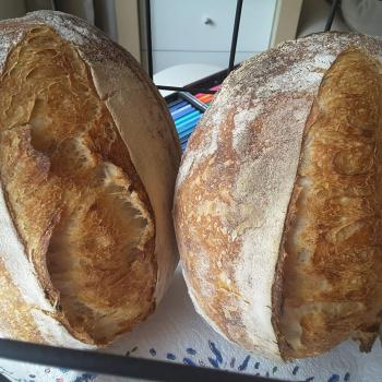 Honey Bunny All kind of sourdough recipes first overview