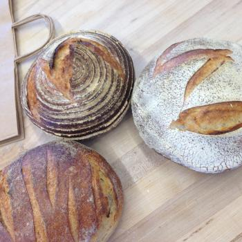 MacPike Family Starter Sourdough Boules first overview