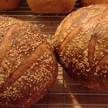 MacPike Family Starter Sourdough Boules second overview