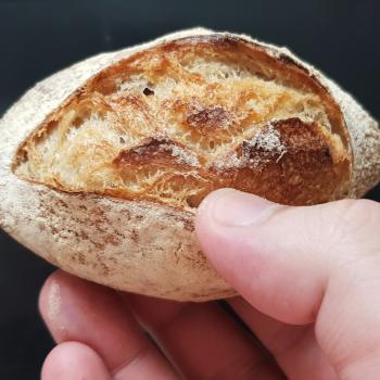 Mang Collar's Sourdough Classic Sour Dough rolls first overview
