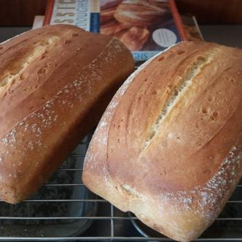 Plimmerton culture Potato bread first overview