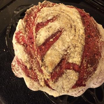 Solveig Beetroot Sourdough first overview