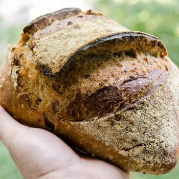Terente Breads, sweet doughs, enriched doughs, waffles and many more first overview