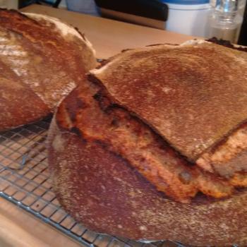 Tony Edison whole wheat & Glenn Emmer whole wheat first slice