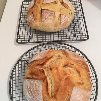 Wheatbelt Fester Round Bread first overview